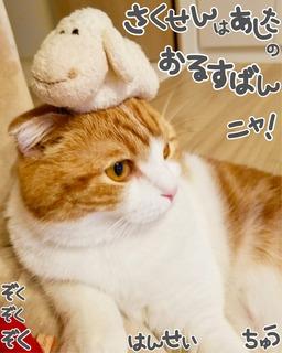 S__17244166.jpg