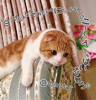 S__18161677.jpg