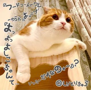 S__18882563.jpg
