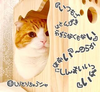 S__22462472_0.jpg