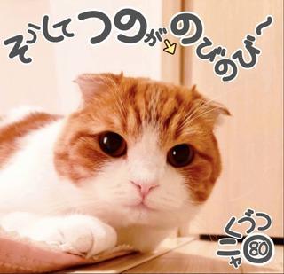 S__43417610.jpg