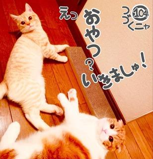 S__48283654.jpg