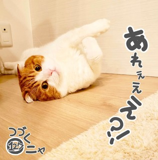S__51912710.jpg